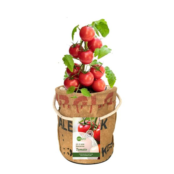 Let it Grow - Veggi & Fruittie - Tomate - Fairtrade Upcycling
