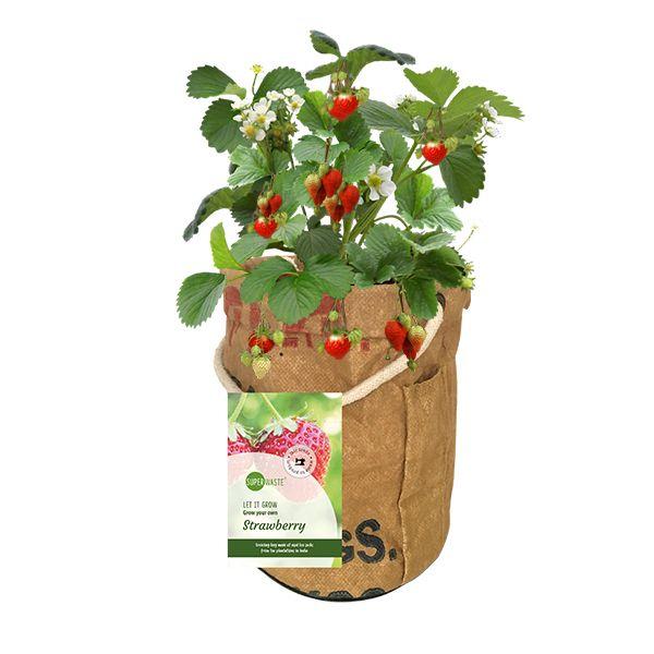 Let it Grow - Veggi & Fruittie - Erdbeere - Fairtrade Upcycling