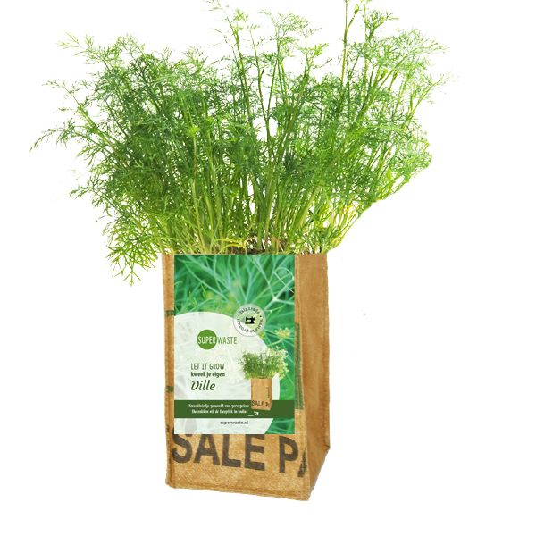 Let it grow - Dill Kräuter-Pflanze - Fairtrade Upcycling