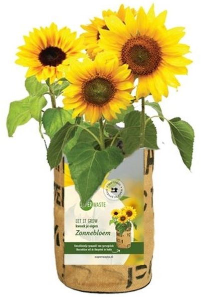 Let it grow - Sonnenblume - Fairtrade Upcycling