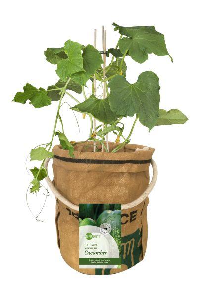 Let it Grow - Veggi & Fruittie - Gurke - Fairtrade Upcycling