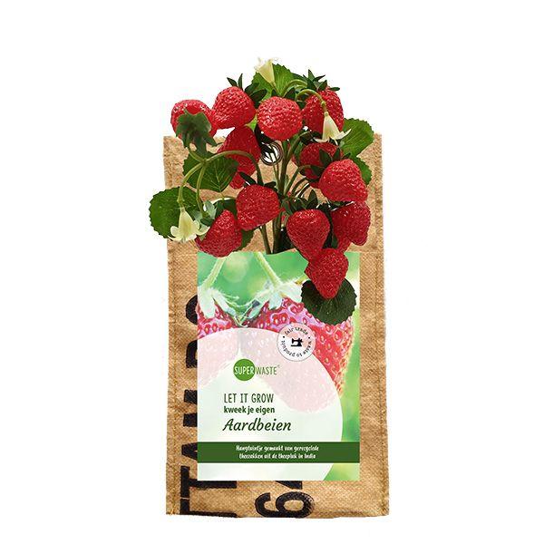Let it grow - Hängegarten Erdbeeren - Fairtrade Upcycling