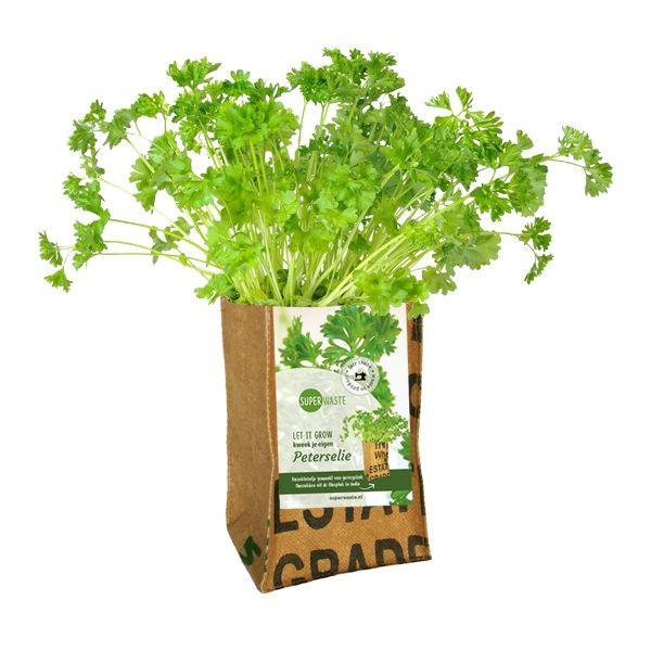 Let it grow - Petersilie Kräuter-Pflanze - Fairtrade Upcycling