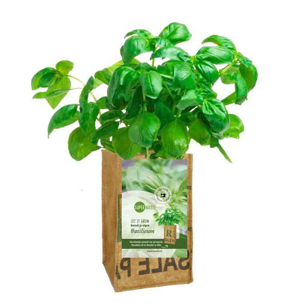 Let it grow - Basilikum Kräuter-Pflanze - Fairtrade Upcycling