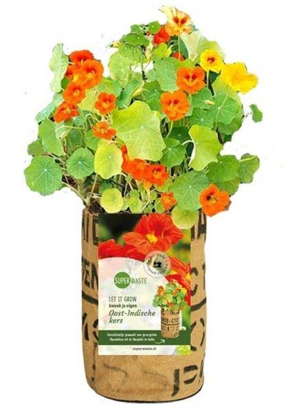 Let it grow - Kapuzinerkresse - Fairtrade Upcycling